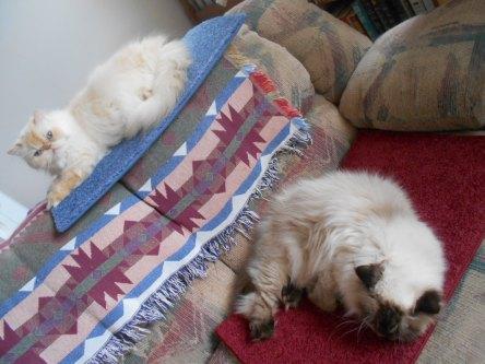 Snoopy & Zip cat mats